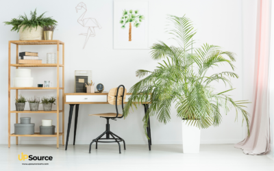 Why Having Plants in Your Workspace can Reduce Stress